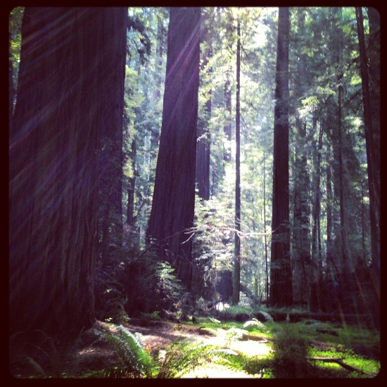 Redwoods Magic Light
