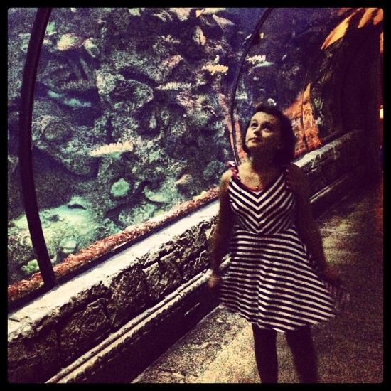 Shark Tank Aquarium, Las Vegas